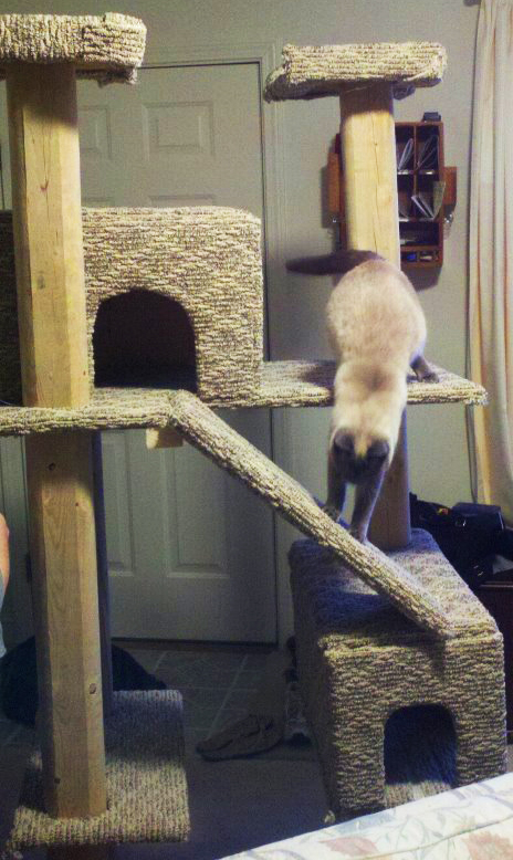 how to build a cat condo